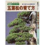 【書籍】盆栽 五葉松の育て方 本 ブック 近代出版