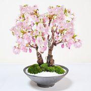 桜の2本立ち さかずきの器